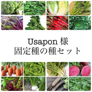 Usapon様 ★伝統野菜★固定種の種セット(野菜)