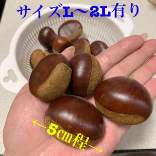 朝獲り 生栗 🌰栗 サイズL〜2L 30個〜【ラスト】(野菜)