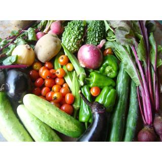 野菜セット 60サイズ 農薬 ・化学肥料不使用(野菜)