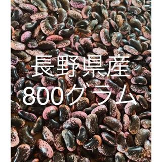長野県産 800g 紫花豆 9/25採れたて!(野菜)