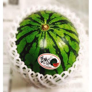 ギフトにも!美味しい沖縄ブランド 今帰仁スイカ 2Lサイズ 1玉(フルーツ)