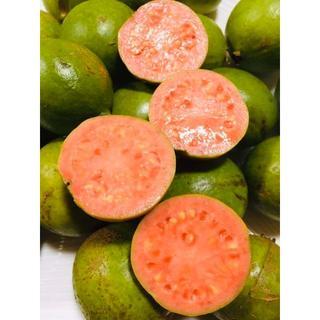 お買得 送料込!ほんのり甘くとろける!沖縄産グァバ 赤果肉 1.5Kg!(フルーツ)
