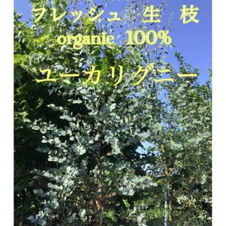 ユーカリグニー   枝 生枝 フレッシュ 自然農法 自然栽培 100% 畑(その他)