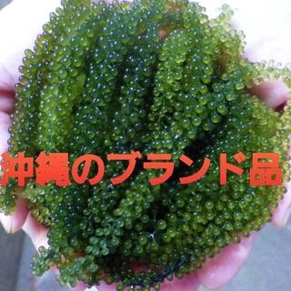 茎無し 海ぶどう たっぷり100g