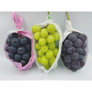 大特価❗️食べ比べセット ナガノパープル1房シャインマスカット1房ピオーネ1房(フルーツ)