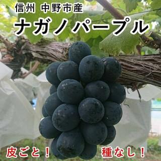 長野県 中野市産 大粒 ナガノパープル 2パックセット (350g入×2個) 種