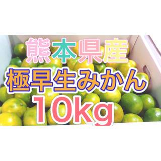熊本県産極早生みかん10kg