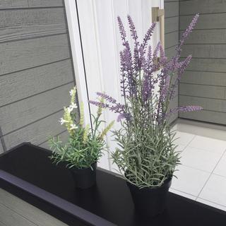 イケア(IKEA)の観葉植物インテリア(ドライフラワー)