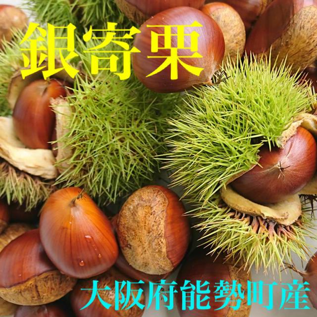 3キロ 食品/飲料/酒の食品(野菜)の商品写真