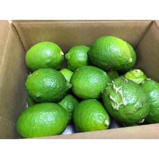 愛媛県産低農薬グリーンレモン  2.5kg(フルーツ)