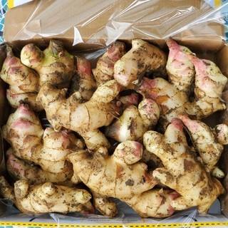 高知県産 土付き新生姜コンパクト1(野菜)