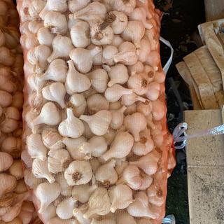 青森県産乾燥ニンニク10kgサイズS(野菜)
