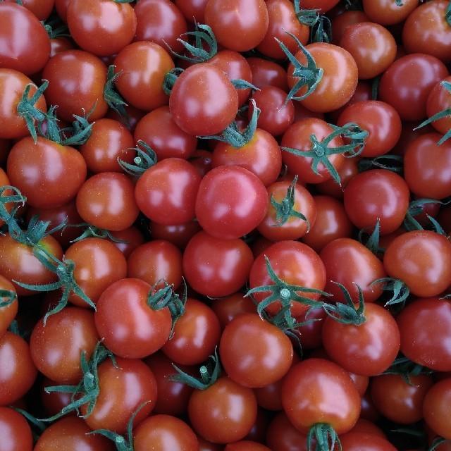 ☆mythica☆様専用 かぐら南蛮とミニトマト 食品/飲料/酒の食品(野菜)の商品写真