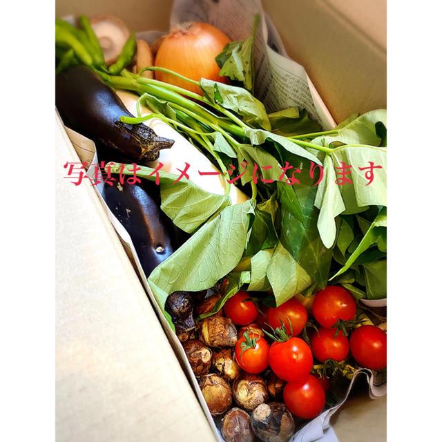 朝どれ新鮮お野菜詰め合わせ 60サイズ 10月3日発送 食品/飲料/酒の食品(野菜)の商品写真