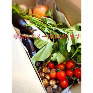 朝どれ新鮮お野菜詰め合わせ 60サイズ 10月3日発送