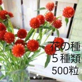 お花の種    5品種  500粒セット千日紅  (その他)