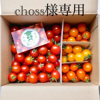 ミニトマト【農学博士のDr.トマトカロテンミックス5Kg】☘️〜青森津軽産〜(野菜)