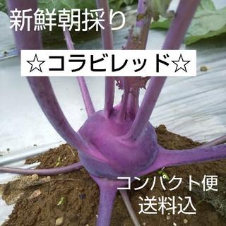 新鮮朝採り【コラビレッド】高血圧の予防に♪ビタミン補給♪野菜(野菜)