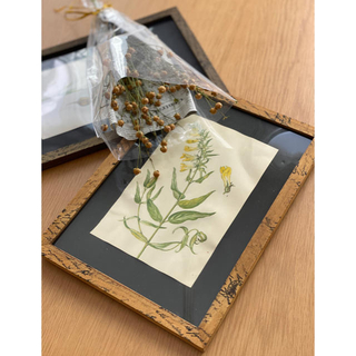 antique  植物絵画(ウェルカムボード)