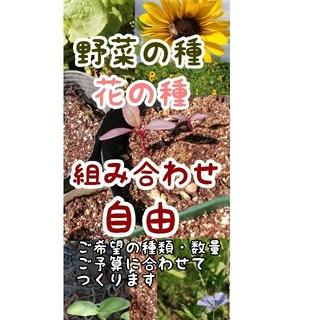 野菜・花の種 秋蒔き野菜の種あり・自然農、自家採取の種あり(野菜)