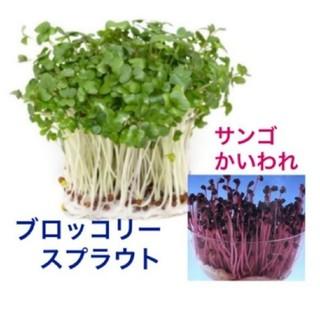ブロッコリースプラウト(種1.600粒以上)・サンゴかいわれ(種100粒)(野菜)