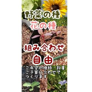 野菜の種・花の種 自家採取・自然農・令和2時間収穫あります(野菜)