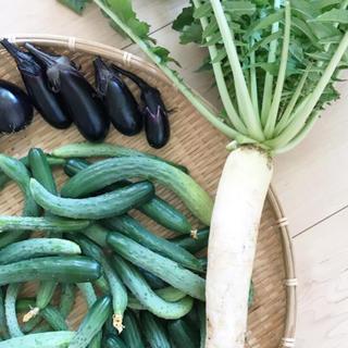 ポパイ畑野菜詰め合わせ60サイズ即購入可(野菜)