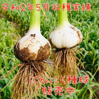 80片 ニンニク 種球 ホワイト種 発芽率90%以上!今からが植えどきです♪(野菜)