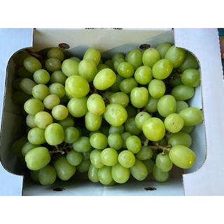 秋田県産シャインマスカット 家庭用 2キロ箱(フルーツ)