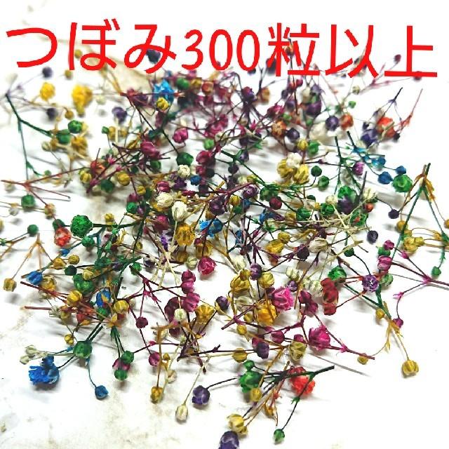 かすみ草ドライフラワー つぼみ300粒 ハンドメイドのフラワー/ガーデン(ドライフラワー)の商品写真