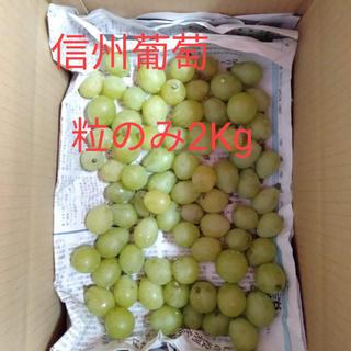 信州葡萄 黄甘 巨峰 ピオーネ 粒売り 2kg