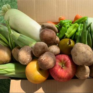 ★60サイズ★ 無農薬新鮮野菜果物セット 10種類(野菜)