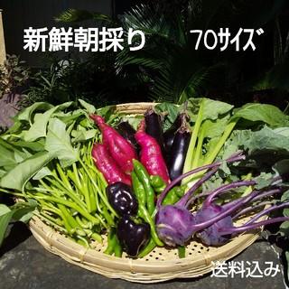 新鮮朝採り野菜セット♪血液サラサラ♪おためし野菜(野菜)