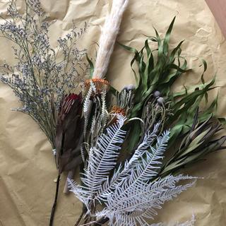 ドライフラワー・ネイティブフラワー 花材8種セット(ドライフラワー)