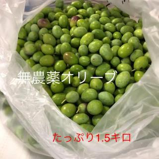 無農薬オリーブ!たっぷり1.5キロ