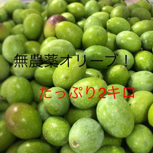 無農薬オリーブ!たっぷり2キロ 食品/飲料/酒の食品(野菜)の商品写真