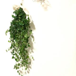 [お値下げ]グリーンのスワッグ 観葉植物 ナチュラル 自然 素材 U(ドライフラワー)