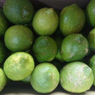 無農薬グリーンレモン(わけあり3㎏)(フルーツ)