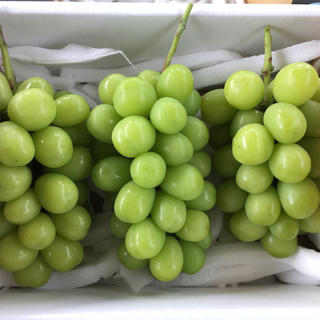 山梨勝沼産シャインマスカット2キロ(フルーツ)