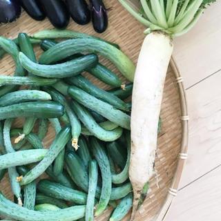 ポパイ畑野菜詰め合わせ60サイズ即購入可 ニックネームさん専用(野菜)