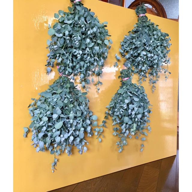 お花屋さんが作ったフレッシュユーカリの特大スワッグです‼️ ハンドメイドのフラワー/ガーデン(ドライフラワー)の商品写真