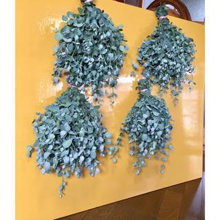 お花屋さんが作ったフレッシュユーカリの特大スワッグです‼️(ドライフラワー)