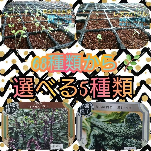野菜の種 ハーブの種 エディブルフラワー 固定種 有機種子 家庭菜園 プランター 食品/飲料/酒の食品(野菜)の商品写真