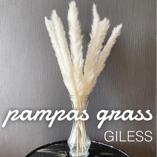 パンパスグラス ドライフラワー テールリード インテリア 花材 ホワイト 10本(ドライフラワー)