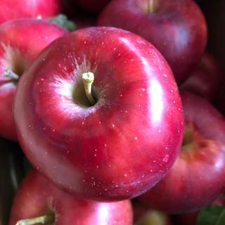 紅玉 りんご(フルーツ)