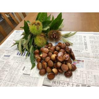 丹波栗 兵庫県産 Mサイズ 1.5kg(フルーツ)