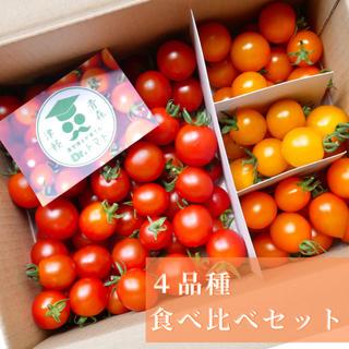 ミニトマト【農学博士のDr.トマト4種 1Kg】☘️〜青森津軽産〜(野菜)