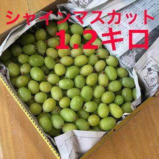 シャインマスカット 小粒1.2キロ(フルーツ)