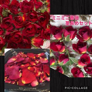 niko様専用★ミニミニ薔薇&ミニ薔薇(赤色)&花びら2g(大小mix)セット(ドライフラワー)