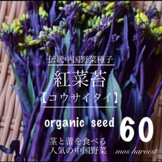 伝中国野菜種子◆紅菜苔 コウサイタイ◆        【無農薬 種子60粒】(その他)